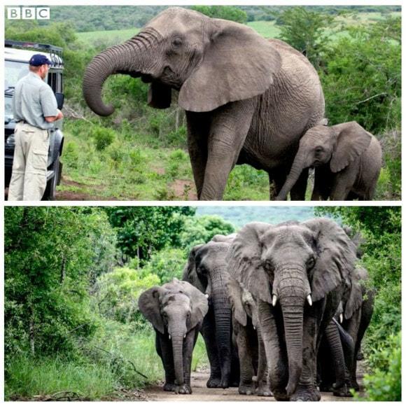 Elephants mourning - WORLD OF BUZZ
