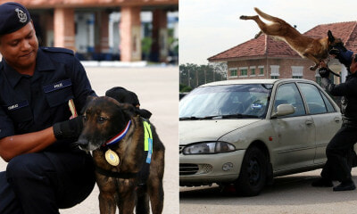 12yo Doggo Gets Medal From PDRM After He Helped Solve A Murder Case - WORLD OF BUZZ