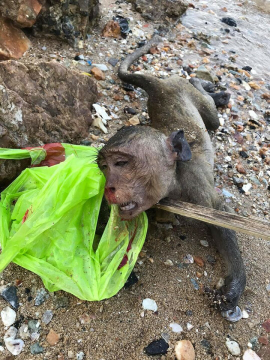 Heartbreaking Photos Show Dead Monkey Inside Plastic Bag After it Drowned & Bled from Nose - WORLD OF BUZZ