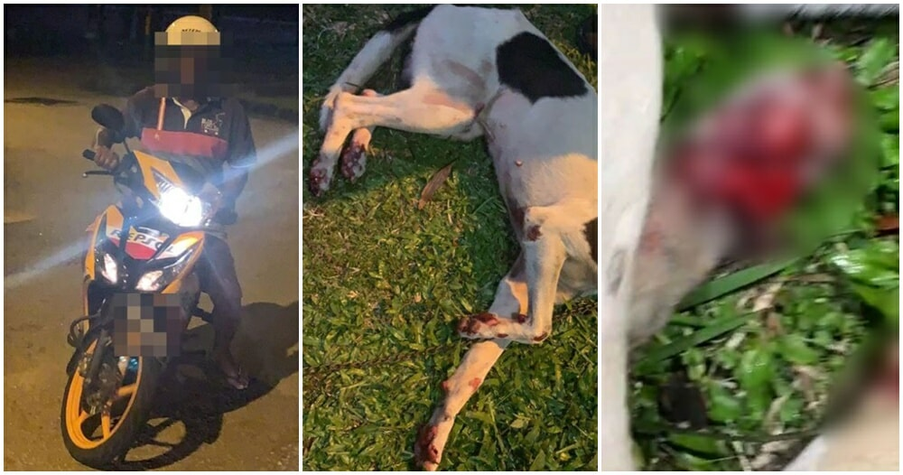 Heartless Perak Man Ties Doggos Limbs To His Motorbike & Drags Her Until Her Paws BLEED - WORLD OF BUZZ 4
