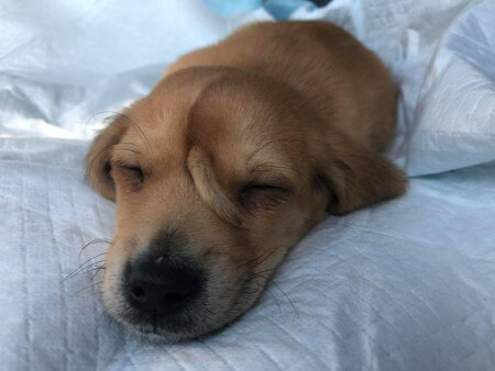 Injured 'Unicorn' Pupper With A Smol Little Tail On It's Forehead Was Found By Rescuers - WORLD OF BUZZ 3