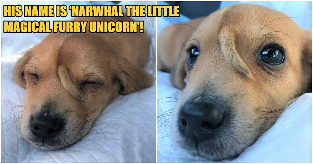 Injured 'Unicorn' Pupper With A Smol Little Tail On It's Forehead Was Found By Rescuers - WORLD OF BUZZ