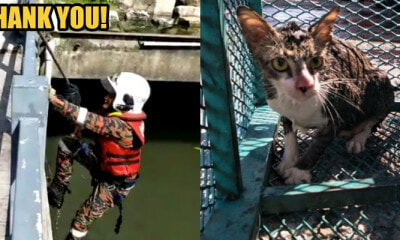 Johor Firemen Spent an Hour to Rescue a Cat That Fell Into a 6-Metre Drain - WORLD OF BUZZ 3
