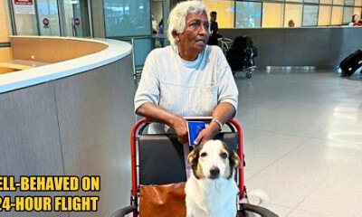 Kind Airline Staff Allowed a Service Dog to Travel with Its Elderly Owner from KL to Boston - WORLD OF BUZZ