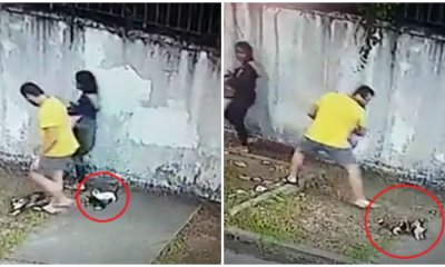 M'sian Man Dumps Kittens By Roadside, Attempts To Smack Adult Cat With Crate - WORLD OF BUZZ