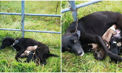 Mummy Dog Gets Chained Tightly To Fence With 6 Newborn Puppies & Left To Starve - WORLD OF BUZZ