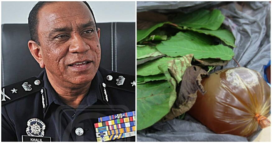 PDRM: Growing Ketum Plants Can Help With The Betterment of Malaysia - WORLD OF BUZZ 1