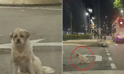 Sad Doggo Abandoned At KL Road Still Waits Patiently For Owner to Come Back - WORLD OF BUZZ