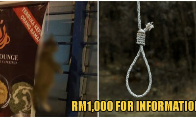 Stray Cat Found Cruelly Hung To Death In Perak, Activists Offering RM1,000 For Information - WORLD OF BUZZ