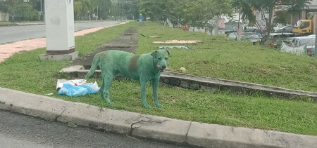 Stray Doggo in Subang Was Painted Green By Anonymous People, Netizens Outraged - WORLD OF BUZZ 2