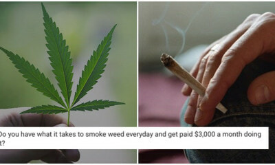 This Company Will Pay You RM150K A YEAR Just To Smoke Weed Erry'day - WORLD OF BUZZ