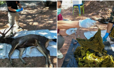 Underwear, Instant Noodles Packaging & Plastic Found In Stomach Of Wild Dead Deer - WORLD OF BUZZ 3