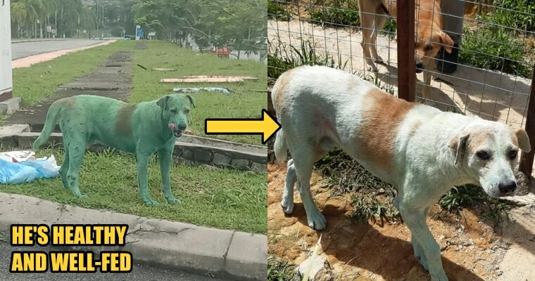 Update: The Green Dog was Not Abused, He Only Rolled Over Green Powder at The Dumpsite - WORLD OF BUZZ 1
