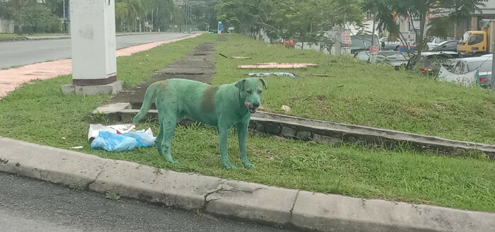 Update: The Green Doggo was Not Abused, He Only Rolled Over Some Green Powder at The Dumpsite - WORLD OF BUZZ 1