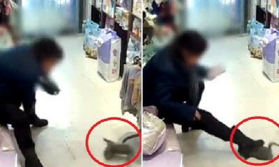 Video: Woman Brutally Throws & Steps On Kitten After Pet Shop Owner Refused to Give Her Refund - WORLD OF BUZZ 3