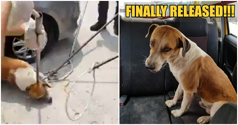 Viral MPSJ Doggo, Bruno Puchong Was Released, Now Looking For A Furever Home! - WORLD OF BUZZ