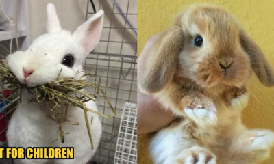 5 Common Rabbit Myths and Misconceptions Busted: Read This Before Adopting One - WORLD OF BUZZ