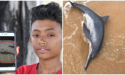 Beached Dolphin That Was Rescued In Terengganu Found Dead - WORLD OF BUZZ