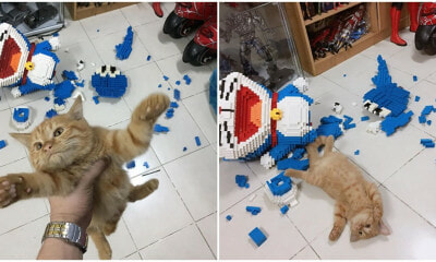Cheeky Kitty Destroys 2,432 Piece Doraemon After Its Owner Spent An Entire Week Assembling It - WORLD OF BUZZ 4