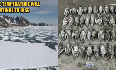 Climatologist: Fish & Seabirds are Dying, and 2019 Is The Warmest Year on Record - WORLD OF BUZZ 5