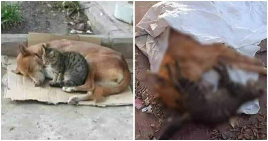 Cute Cat & Dog Best Friends Found Cruelly Poisoned To Death By Unknown Assailant - WORLD OF BUZZ