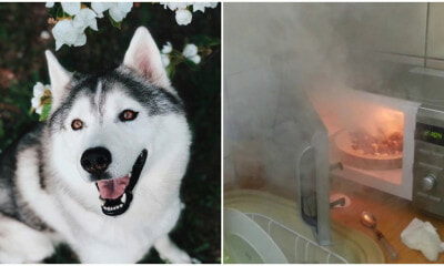 Dog Turns On Microwave & Accidentally Starts A Fire After Being Left Home Alone - WORLD OF BUZZ 2