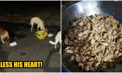 Generous Man Cooks A Warm Feast For The Stray Dogs So That They Don't Get Cold From The Weather - WORLD OF BUZZ