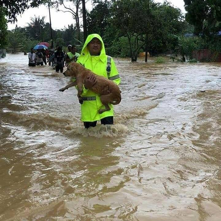 Heartwarming Photos Show Rescue Team Saving Helpless Pets During M'sian Flash Floods - WORLD OF BUZZ 2