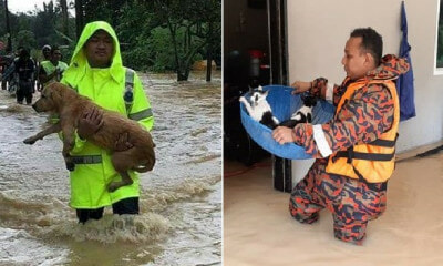Heartwarming Photos Show Rescue Team Saving Helpless Pets During M'sian Flash Floods - WORLD OF BUZZ 3