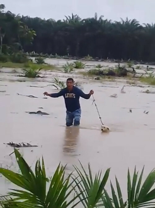 Kind M'sian Man Saves Poor Doggo Abandoned in Middle of Flooded Field - WORLD OF BUZZ 1
