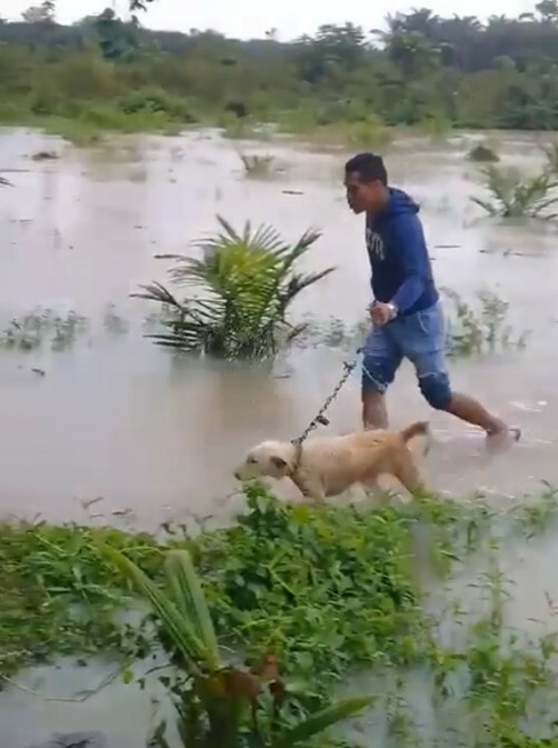 Kind M'sian Man Saves Poor Doggo Abandoned in Middle of Flooded Field - WORLD OF BUZZ 2