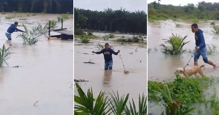 Kind M'sian Man Saves Poor Doggo Abandoned in Middle of Flooded Field - WORLD OF BUZZ 3