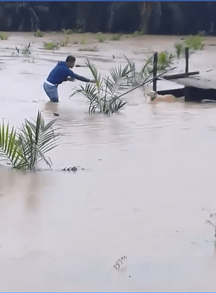 Kind M'sian Man Saves Poor Doggo Abandoned in Middle of Flooded Field - WORLD OF BUZZ