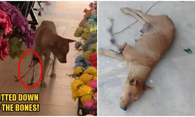 Mummy Dog In N.Sembilan's Leg Was So Rotten, Only Bones Remained; Gets Rescued By 3 Kind Souls - WORLD OF BUZZ