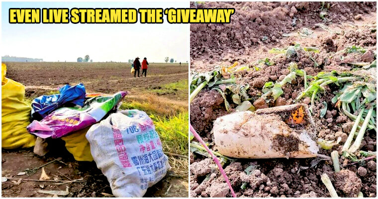 Radish Farmers Lost RM177K When Neighbout Mistook Generosity For Free-For-All Giveaway Leaving The Farm Barren - WORLD OF BUZZ