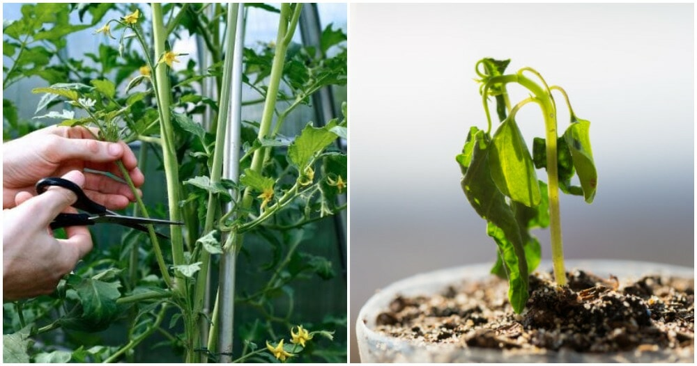 Research: Plants Will Scream When They Are Cut Or If They Do Not Have Enough Water - WORLD OF BUZZ 1
