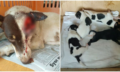 Sabah Dog Was Cruelly Slashed & Left To Bleed While Feeding Her 5 Newborn Puppies - WORLD OF BUZZ