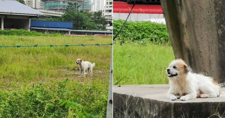 Sad Doggo Wasn't Actually Abandoned, Caretaker Said It's Well-Fed & Loves To Loiter - World Of Buzz