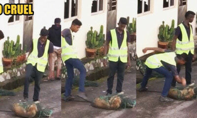 Seremban Dogcatchers Caught Hitting And Kicking A Stray Dog That Was Already Pinned Down - World Of Buzz