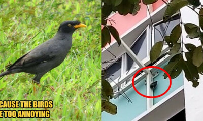 S'porean Woman Hangs a Live Mynah Bird Outside the Window Because She's Been Bothered for 30 Years - WORLD OF BUZZ 3