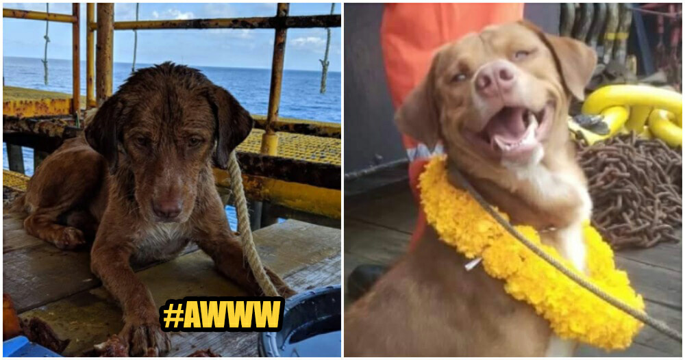 Stranded Doggo In The Middle Of Ocean Was Saved By Brave Offshore Workers - WORLD OF BUZZ 1