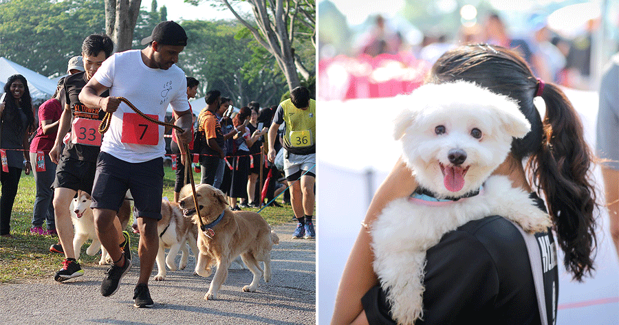This Event In M'sia Has Over 700 Cute Doggos & Is Held In Conjunction With An Amazing Cause! - World Of Buzz