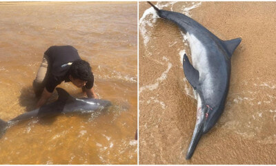 Watch: Terengganu Students Rush To Save Injured Baby Dolphin That Washed Up Ashore - World Of Buzz 3