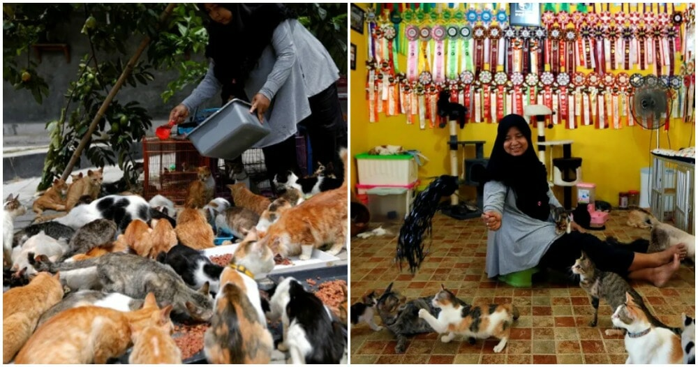 Woman Takes Care Of 250 Cats As She Couldn't Bear Looking At Them Being Abandoned - WORLD OF BUZZ