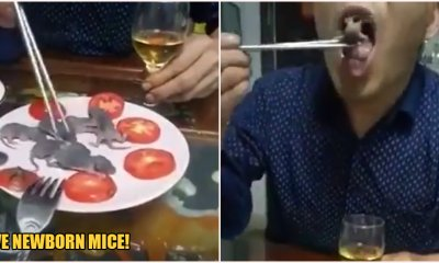 Man Casually Eats Live Newborn Mice While Sipping on Liquor Amid Wuhan Virus Crisis - WORLD OF BUZZ