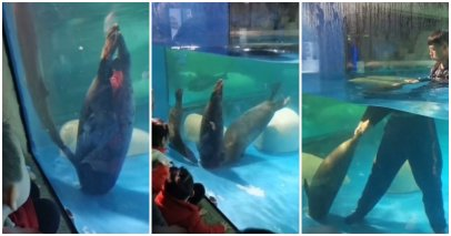 Horrifying Video Shows Seal - WORLD OF BUZZ