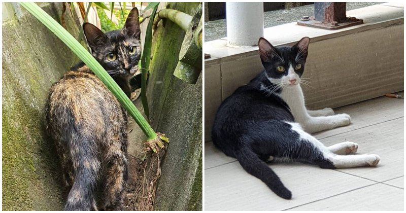 National Museum Volunteer In Search Of Adopters For Stray Cats Before - WORLD OF BUZZ