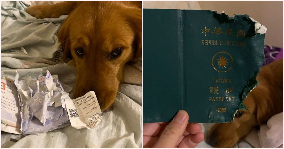 Caring Doggo Chews Up & Destroys Owner's Passport Just Before Her Wuhan Trip - WORLD OF BUZZ