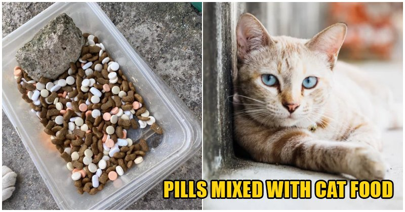 A Malaccan Who Feeds Stray Cats in Her Neighbourhood Finds Her Kibble Bowl Filled Up With Medicine Pills - WORLD OF BUZZ