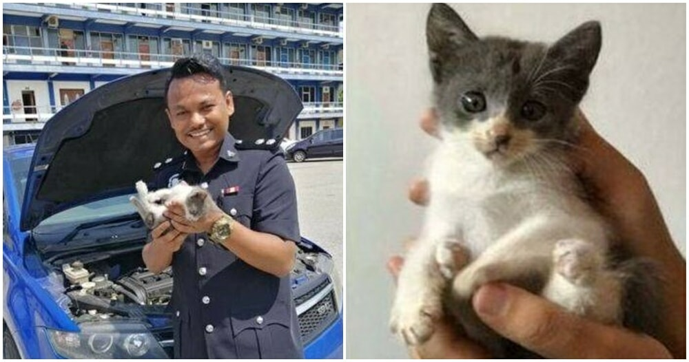Adorable Kitty Took A Nap In Pdrm Officer's Car Engine, Now Left In The Hands Of The Law - World Of Buzz 3